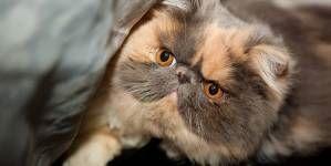 El ritual de aseo felino….