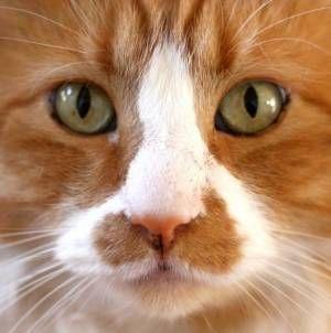 Cómo escoger el tipo de arena adecuada para tu gato
