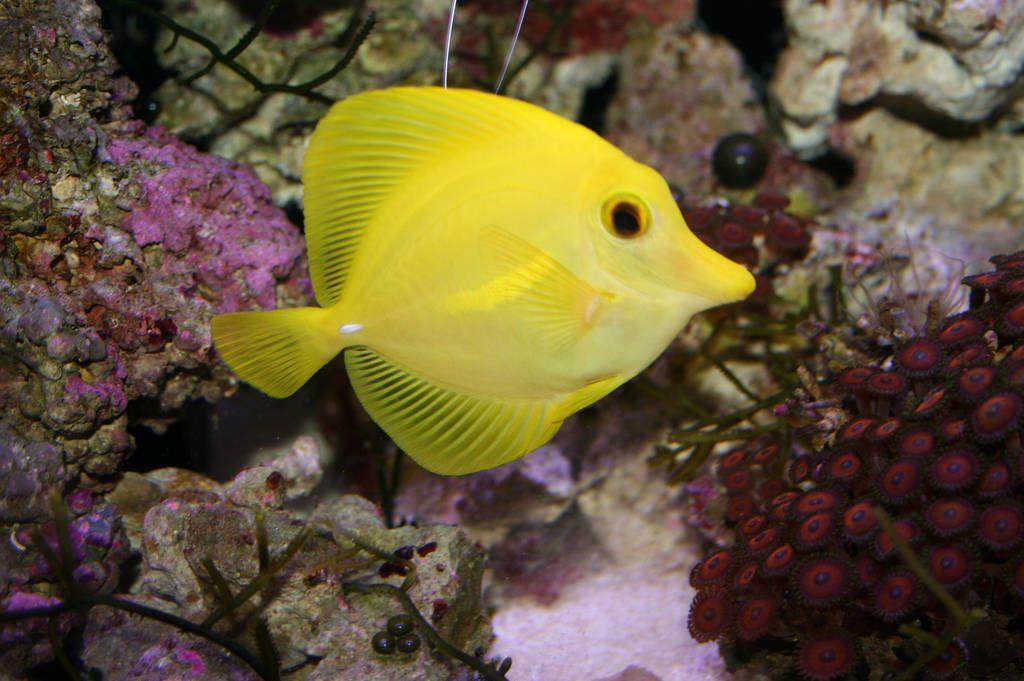 enfermedades peces acuario:
