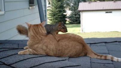 Gato y ardilla lo pasan genial