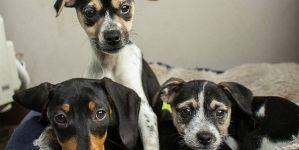 Gestación Canina – Parte II