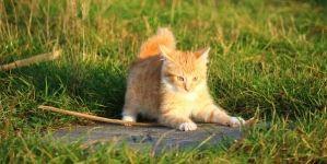 El lenguaje corporal de los gatos