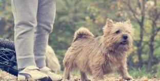 Perros y niños: beneficios de tener un perro en casa
