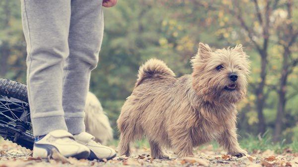 Perros y ni os beneficios de tener un perro en casa tiendanimal - Perros para tener en casa ...