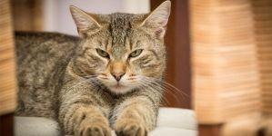 Rascadores para gatos ¿Cuál elegir?