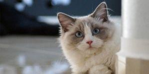 Para qué sirven las vitaminas para gatos