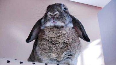 Conejos, un hogar libre de olores