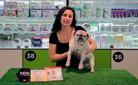 Leishmaniasis canina: protege a tu perro