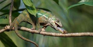 Reptiles domésticos para tener como mascota