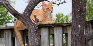 ¿Es conveniente dejar al gato solo en casa?