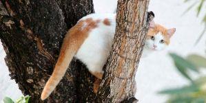 ¿Por qué los gatos necesitan subirse a sitios elevados?