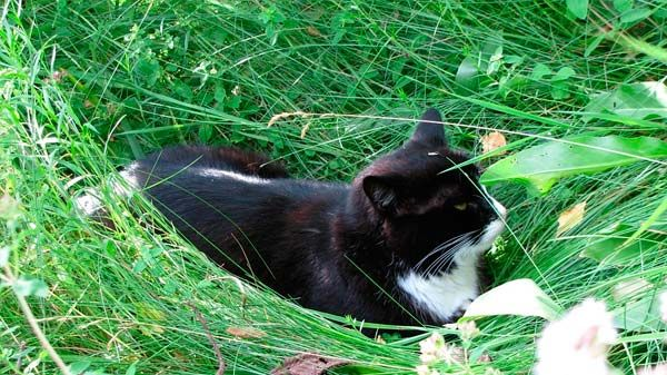 Plantas para gatos 10 plantas que tu felino adorar Plantas seguras para gatos