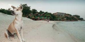 Playas que admiten perros