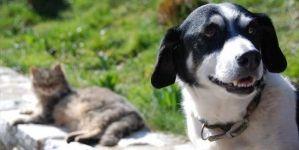 Seguros para mascotas y animales