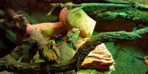 Terrarios para reptiles: ¿se pueden mezclar especies?