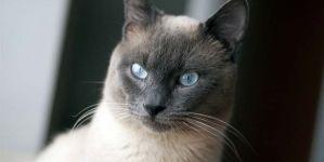 Cómo saber si mi gato está enfermo: lista de pruebas del gato adulto