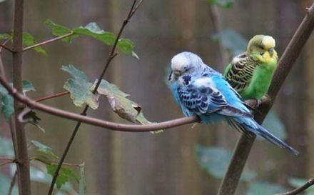 Cuidado de las aves en verano