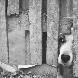 Qué hacer cuando encontramos animales abandonados