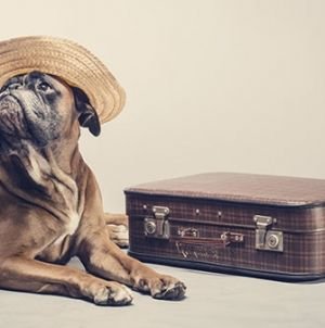 Transportines y mochilas para perros