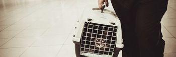Trucos para meter a tu gato en el transportín