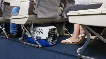 Viajar con perro o gato en avión