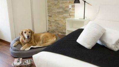 Casual Hoteles, establecimientos Pet Friendly gracias a Tiendanimal