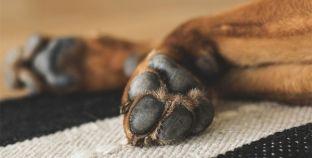 Quiero adoptar un perro: ¿qué debo tener en cuenta?