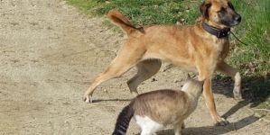 Parásitos externos en mascotas en invierno