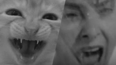 Películas para gatos