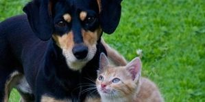 Qué causa el estrés en perros y gatos