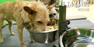 Análisis: Comedero elevado para perros TK-Pet