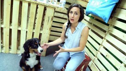 Análisis: Condroprotector para perros y gatos Cosequin