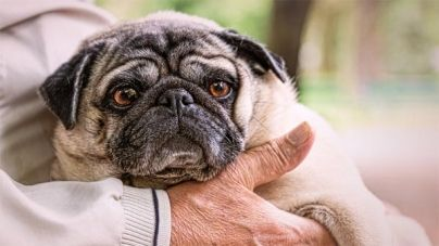 Cómo tratar la dermatitis en perros