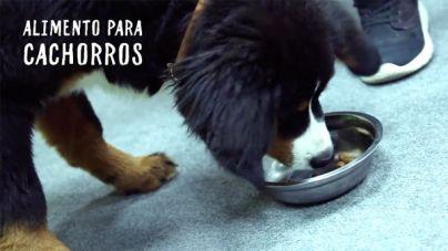 Análisis: Pienso Hill's Science Plan para cachorros