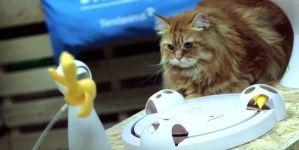 Análisis: Juguetes interactivos para gatos FroliCat