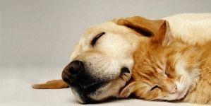 ¿Es tu mascota caprichosa?