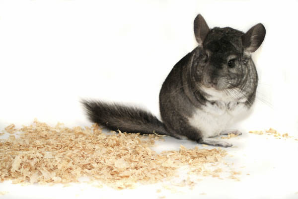Hami Form Optima+ pienso premium para chinchilla