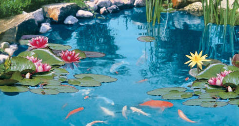 Tetra pond colour sticks intensificador del color for Comida para peces de estanque