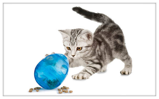 Funkitty egg cersizer dispensador de golosinas para gatos